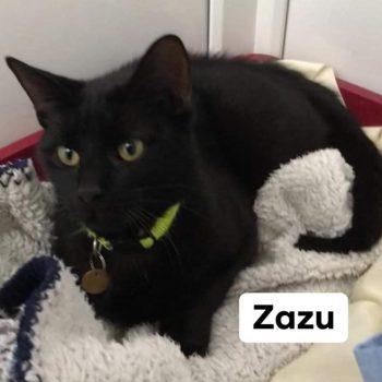 Black cat, yellow eyes