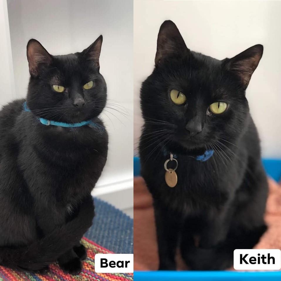 Two sleek black cats